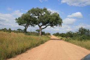 Weg in Krugerpark - Zuid-Afrika