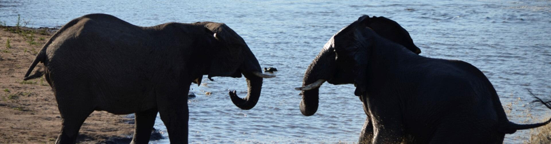 Elephants in the water at Kruger Park