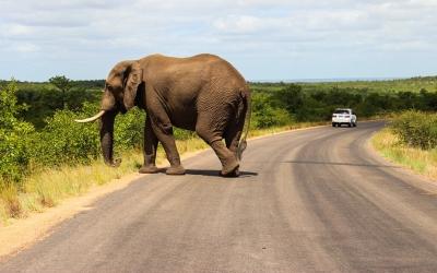 Tip: Offline navigatiesysteem in Zuid-Afrika