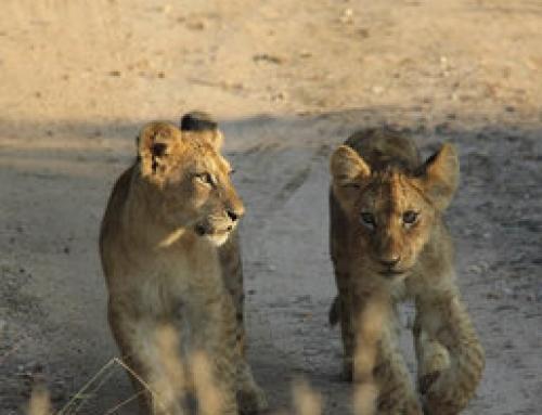 5 belangrijkste tips voor het Krugerpark