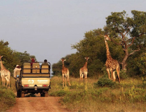 Op een safari gamedrive in Hoedspruit