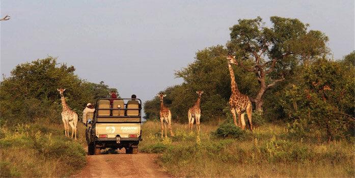 Game Drive Safari - Zuid-Afrika
