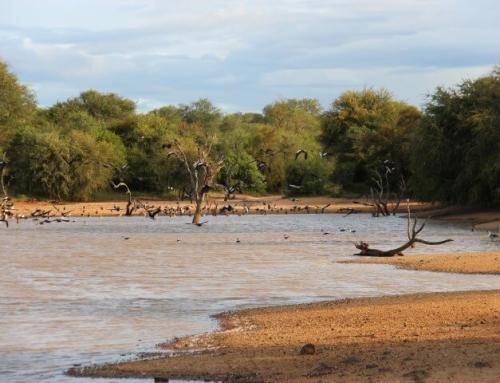 Walking Safari: 5 reasons to do this!