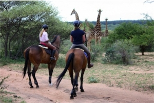 Horse riding Safari South Africa - Zandspruit Estate