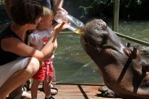 Jessica the Hippo met kind