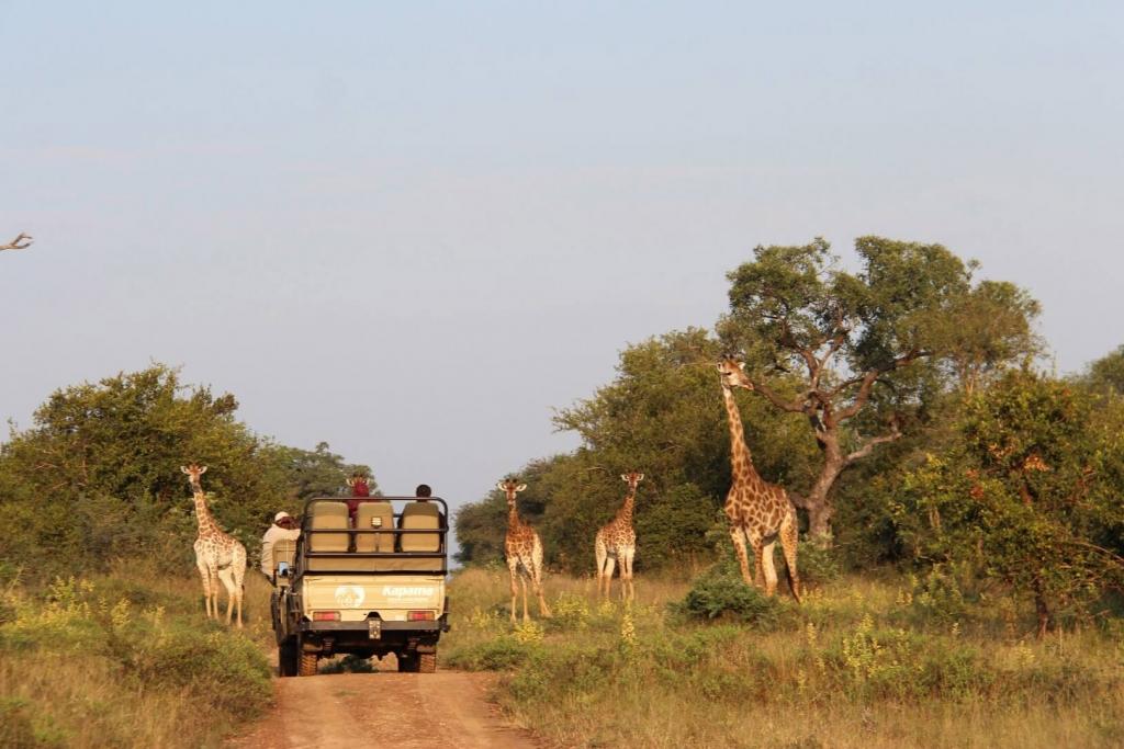 Safari Kapama Game Reserve