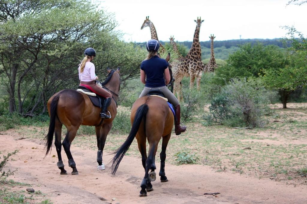 Paardrijden in Zuid Afrika