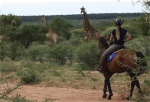 Reiten Suedafrika