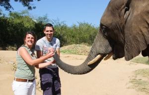 olifant voeren in Zuid-Afrika