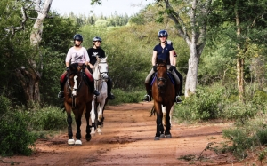 Horse riding in South Africa