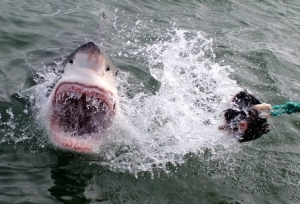 Shark attack in South Africa