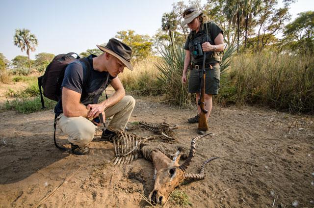 Walking Safari in Kruger National Park - South Africa
