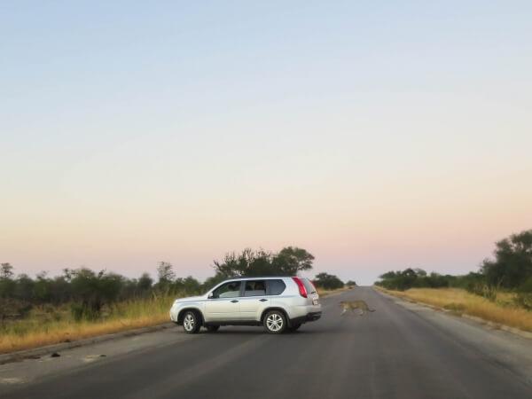 selfdrive krugerpark zuid-afrika