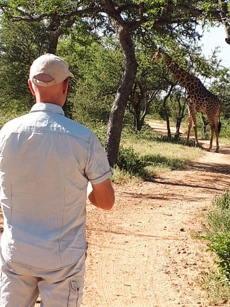 Giraffe tijdens wandelsafari Zuid-Afrika