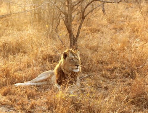 5 Reasons to Visit Kruger National Park