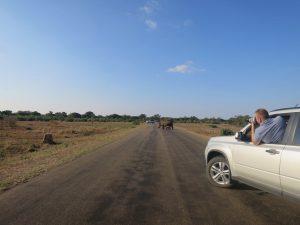 Game Drive in Krugerpark Zuid Afrika