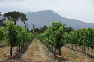 Wijnroute en wijnhuizen in Zuid-Afrika