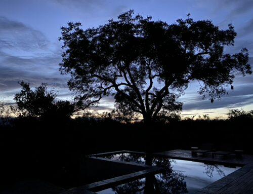Covid 19 situation Hoedspruit & Krugerpark